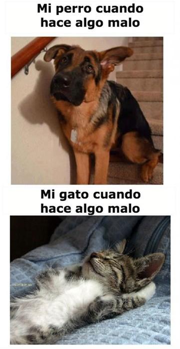 Memes animales gatos perros bromas - 8258426112