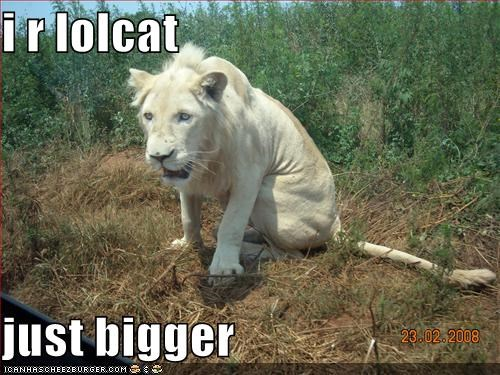 i r lolcat  just bigger