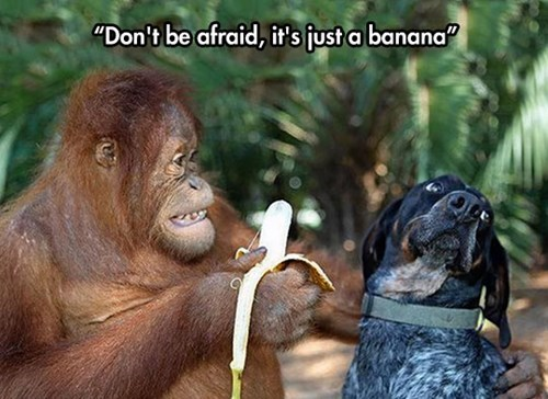banana apes cute dogs feeding - 8258721024