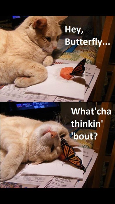 Cats,cute,butterfly,friends