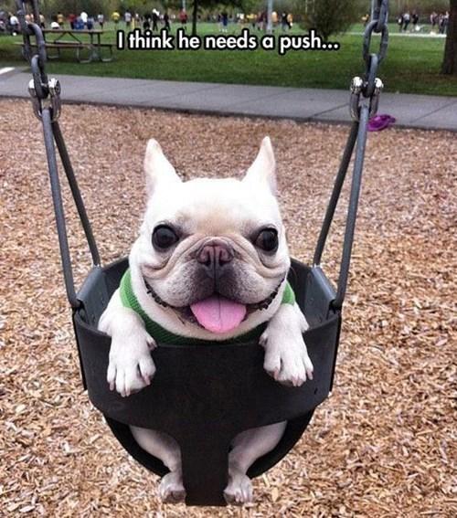 cute dogs swings - 8258754304