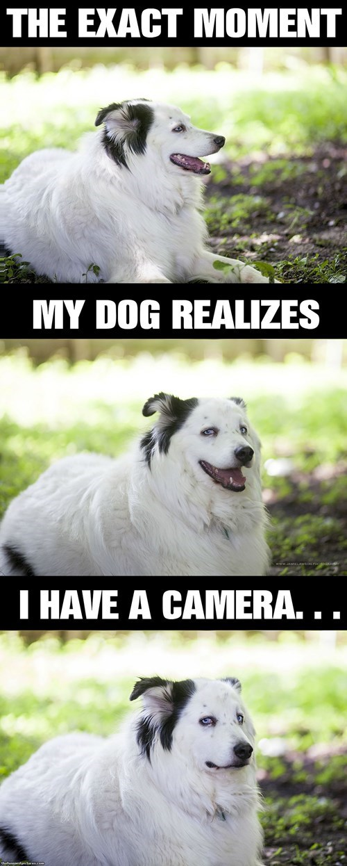 annoying angry dogs photograph funny - 8258773248