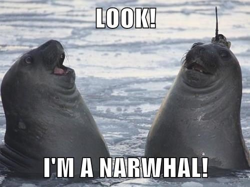 funny narwhal impressions seals - 8258781440