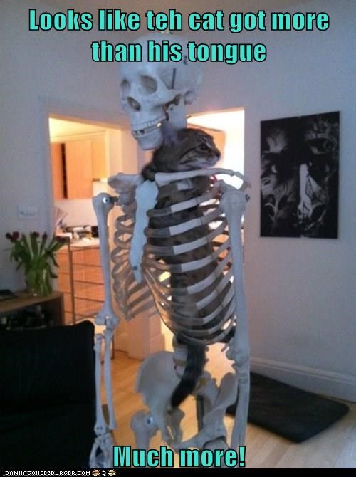 Lolcats Skeleton Lol At Funny Cat Memes Funny Cat Pictures