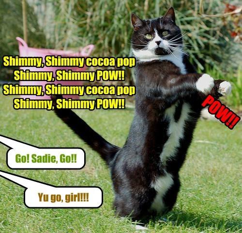 Cats dancing - 8259003392