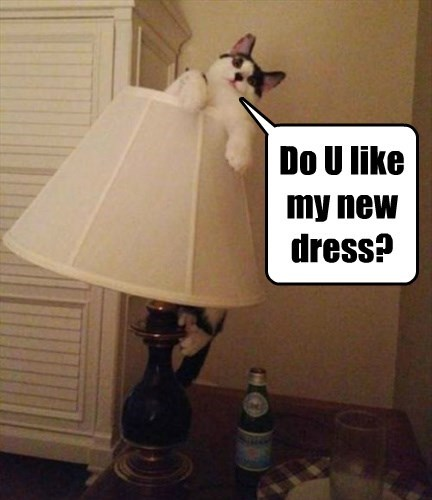 Cats,cute,busted,dress,lamp shade