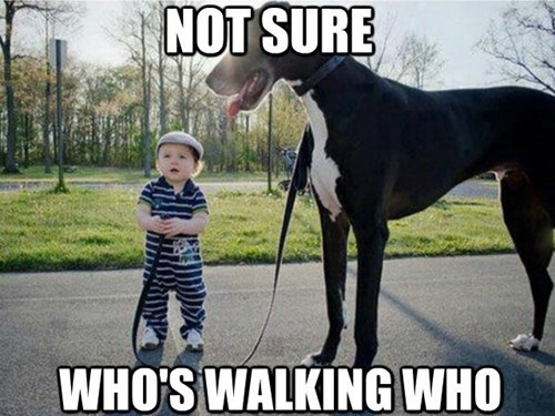 dogs,kids,walk