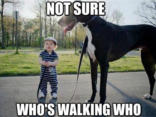dogs kids walk - 8259468288