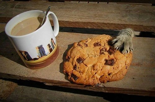 mine,Cats,cookies