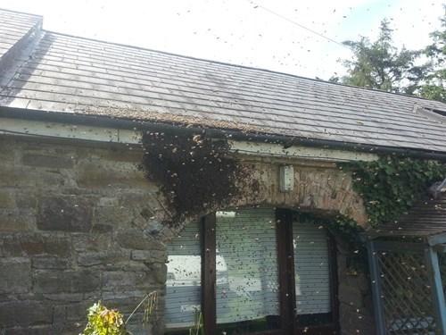 pics nope bees Photo - 8259661312