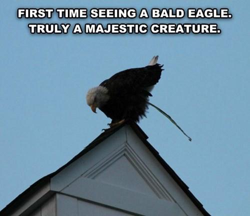 poop,funny,bald eagle