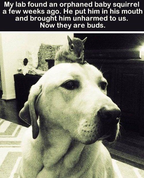 dogs friends cute squirrels rescue - 8259671808