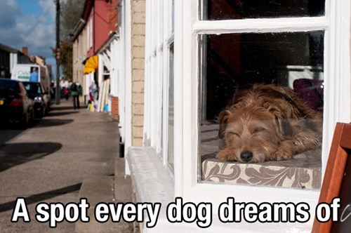 dogs,cute,window