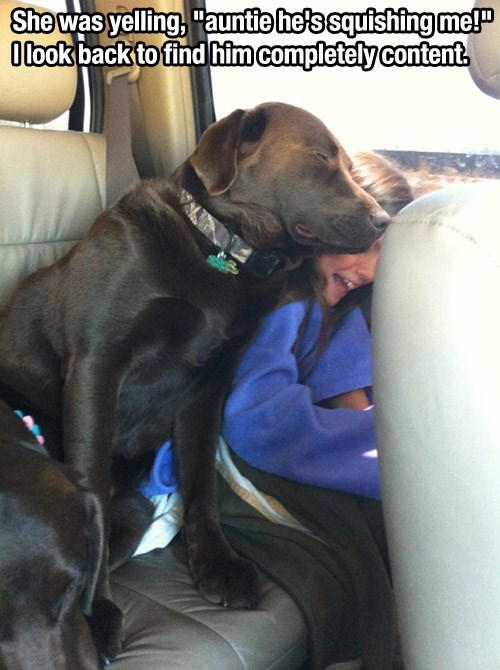 dogs snuggle cute sleeping - 8259684864