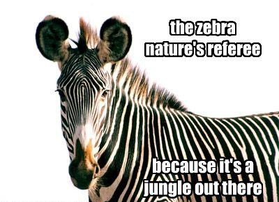funny puns referee zebra