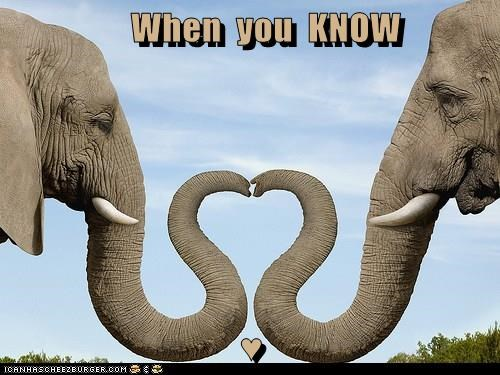 cute elephants heart love - 8261785344