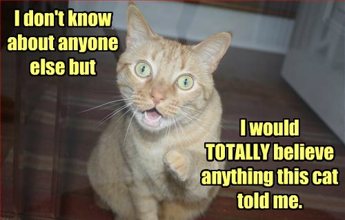 I don't know about anyone else but I would TOTALLY believe anything this cat told me.