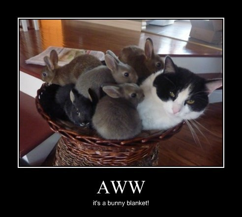 bunnies,Cats,cute,blanket