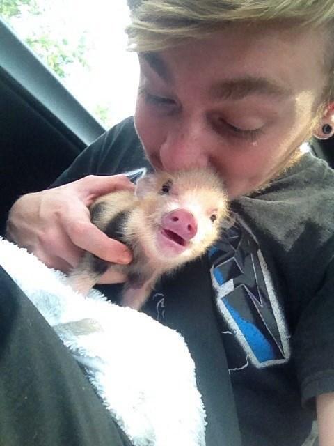 cute piglets squee - 8262198784