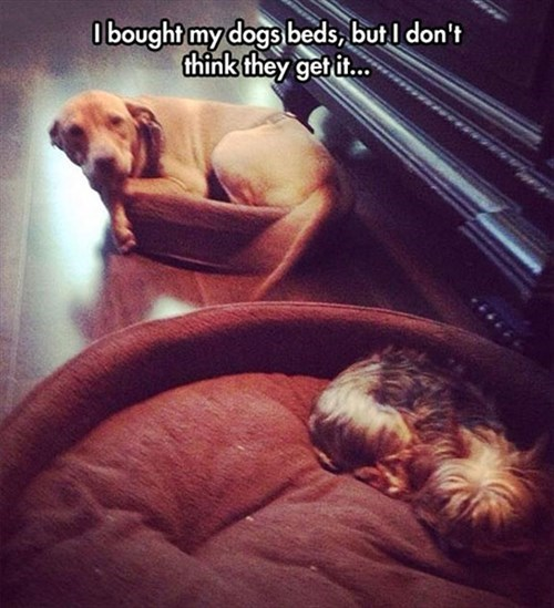 dogs dog beds - 8262204672