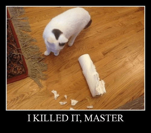 Cats,fight,funny,paper towel