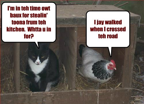 Cats chicken funny time out