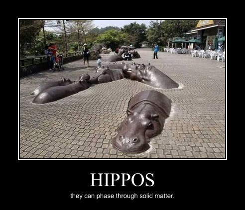 awesome hippos funny scary - 8262780416