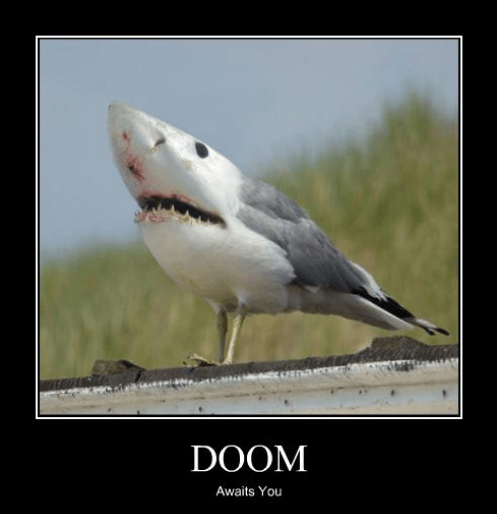 funny,pigeon,scary,shark