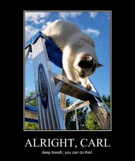 Cats funny ladder scared - 8262798592
