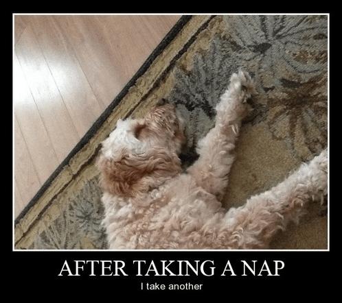 dogs lazy funny - 8262821888