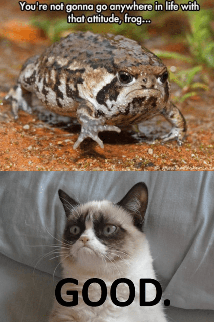 funny Grumpy Cat bad attitude frog - 8262906880