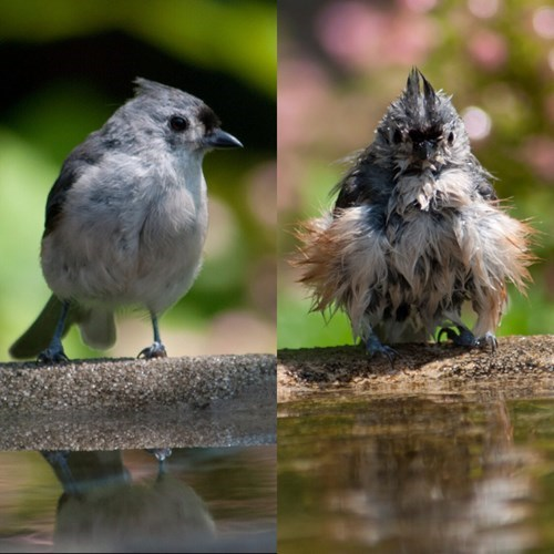 birds,Before And After,shower