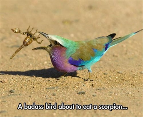 bugs,birds,noms,scorpion