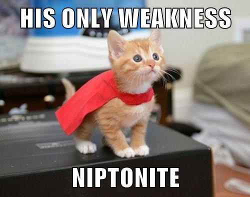 catnip cute kryptonite Cats