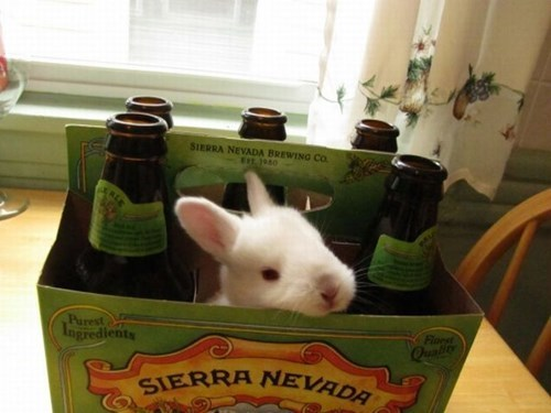beer cute bunny funny hops after 12 g rated - 8263874048