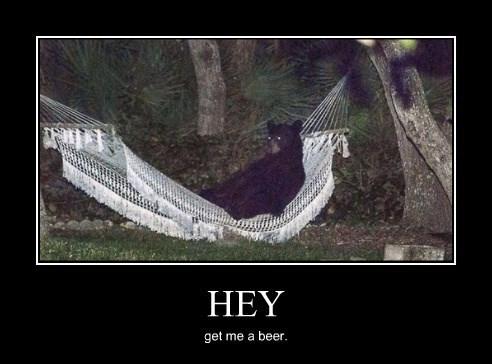 bear,funny,hammock beer