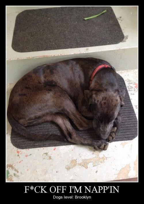 dogs funny nap sleeping - 8264020992