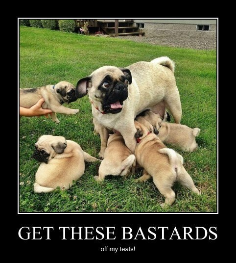 dogs funny scary mother - 8264024064