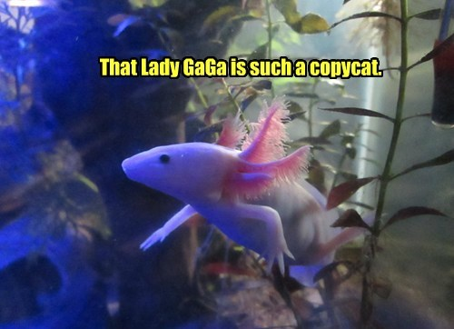 fish lady gaga weird