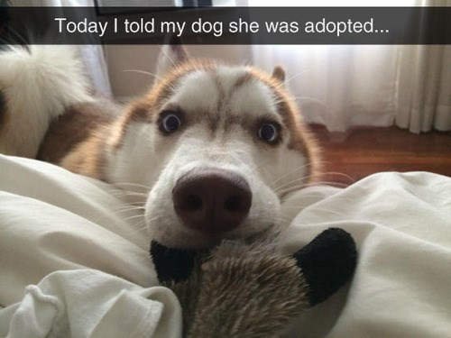 adopted dogs funny life - 8264154112