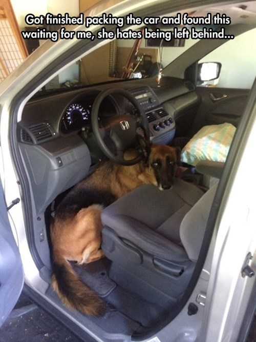 cute dogs driving Sad traveling
