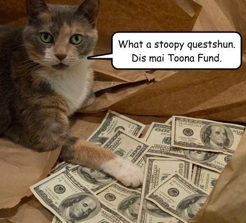tuna noms Cats funny - 8264193024
