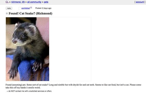 Awesome but inaccurate way of describing a ferret as a cat.