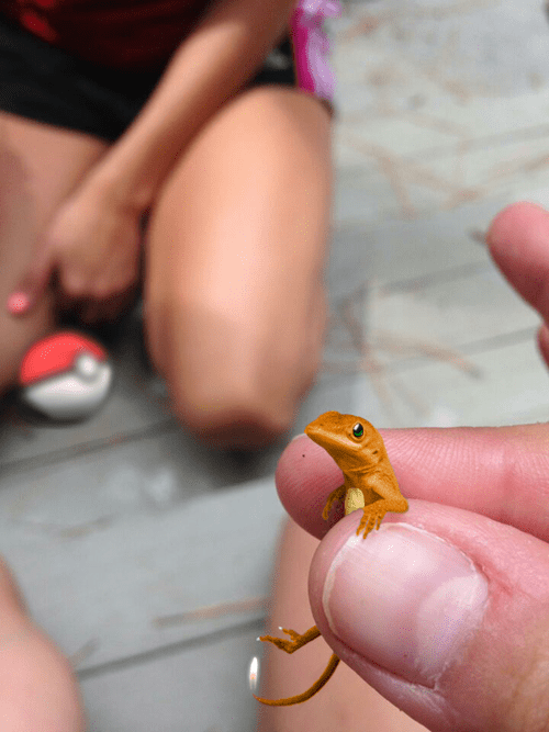 Pokémon unimpressed lizard photoshop Memes - 8264244736