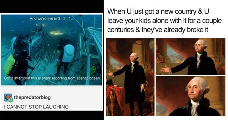 random memes funny memes stupid memes twitter tumblr dumb memes funny tweets animals - 8264453