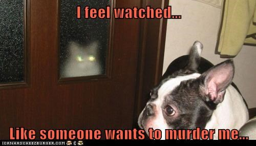 Cats dogs paranoid funny - 8264503808