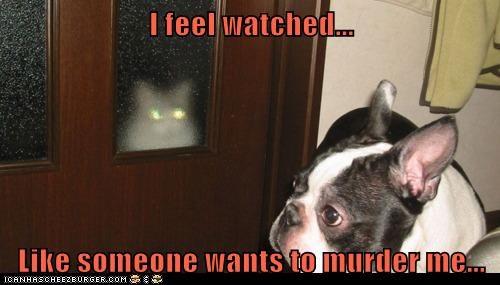 Cats paranoid funny - 8264503808