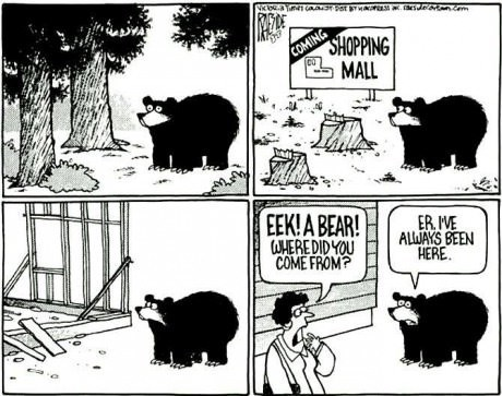 shopping,bears,critters,late capitalism,web comics