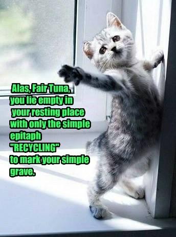 Cats drama tuna - 8265154304