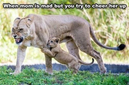 kids cub parenting lion - 8265154560
